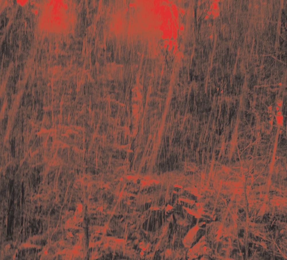 Große, harte schwarze Hahn-Bilder Großer, fetter Hahnenkopf